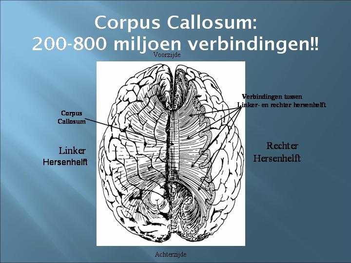 corpus callosum verbindingen